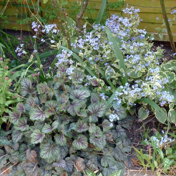 0144-flowerbed