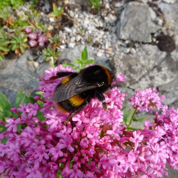 0158-bee