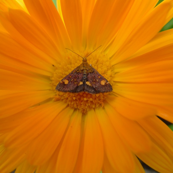 0188-moth
