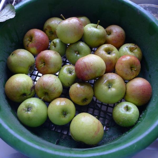 200-apples