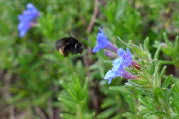 204-beetoflower