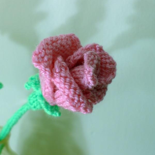 0229-rose2
