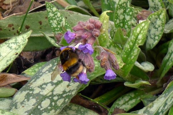 0236-bumblebee