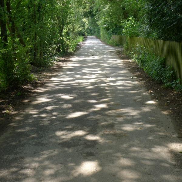 Dappled shadows on road