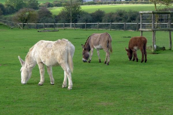 Donkeys (colour)