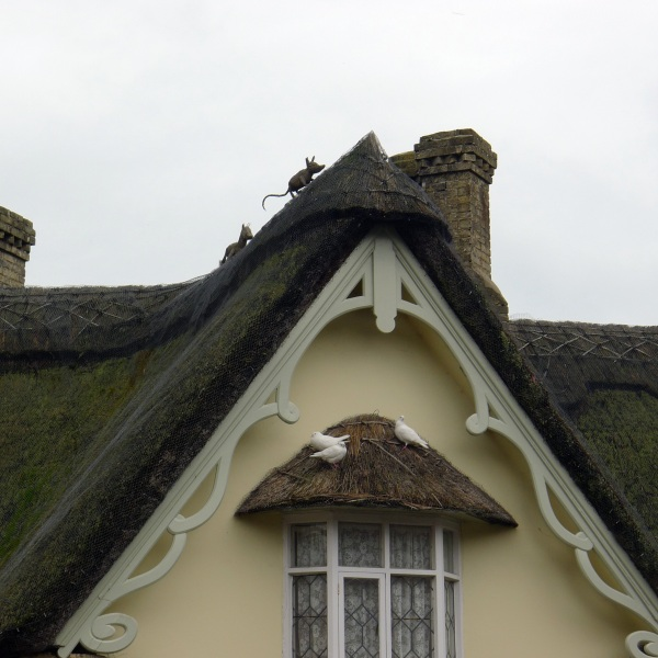 Thatch and doves
