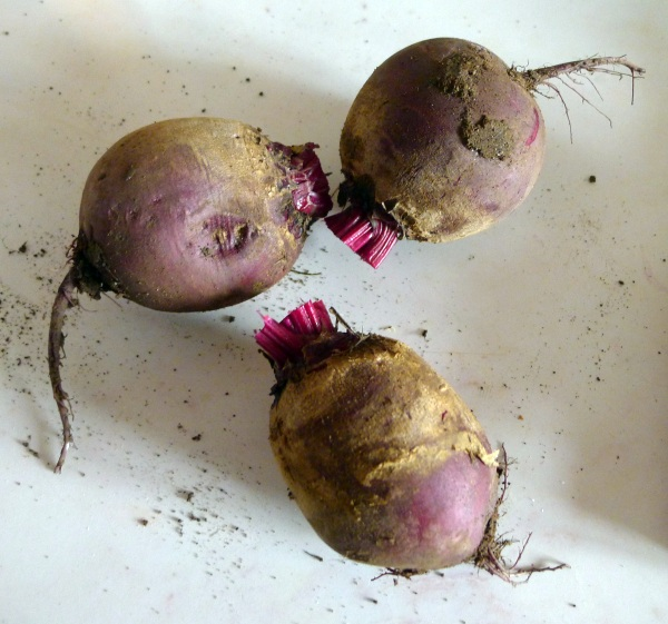 Beetroots cut off