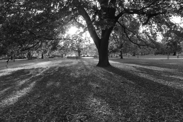 Autumn shadows (monochrome)
