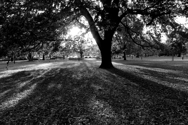 Autumn shadows (monochrome-more contrast)