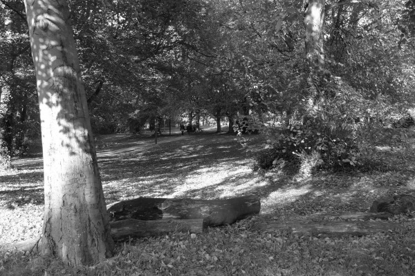 Southampton Common in autumn (monochrome)