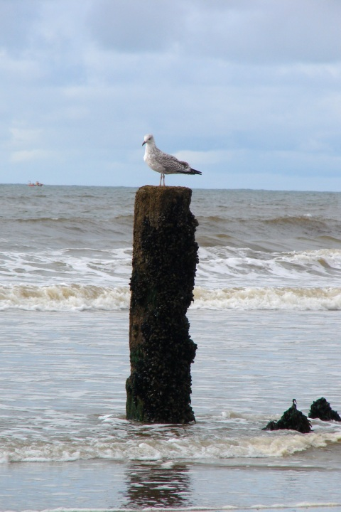 Bird on post