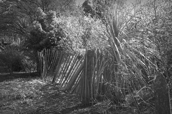 Wooden palings - moody monochrome