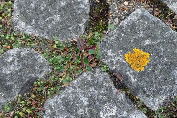 Lichen & liverwort
