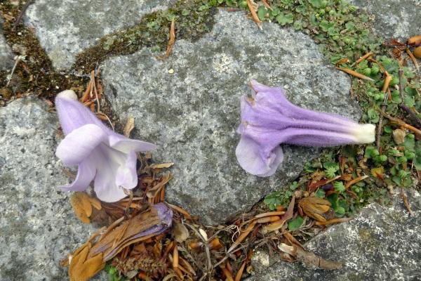 Fallen tree flowers