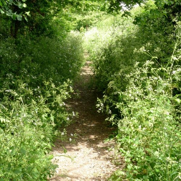 Path narrows