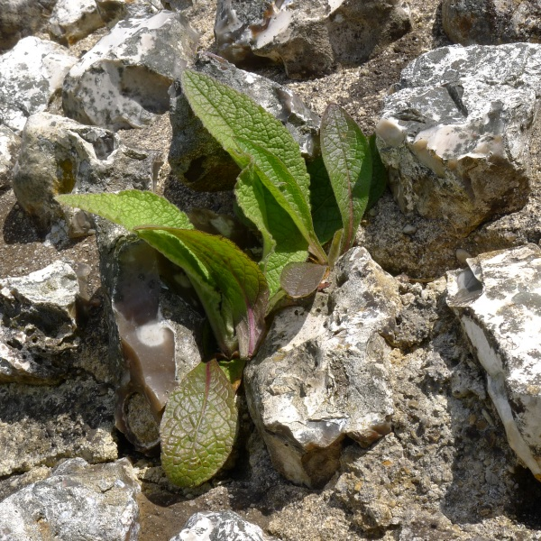Plant in wall