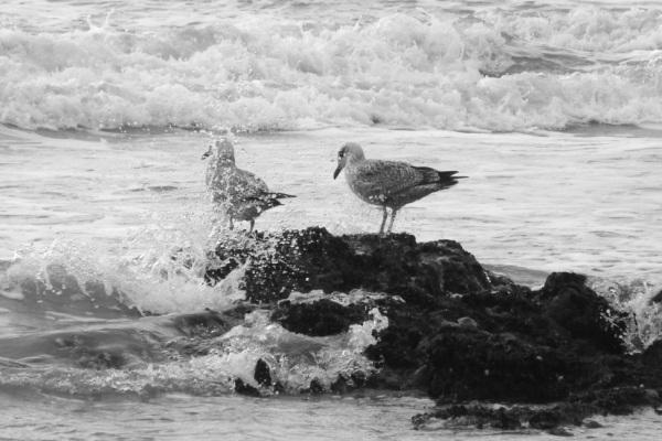 Rainbow Junkie - (2-6) seagulls