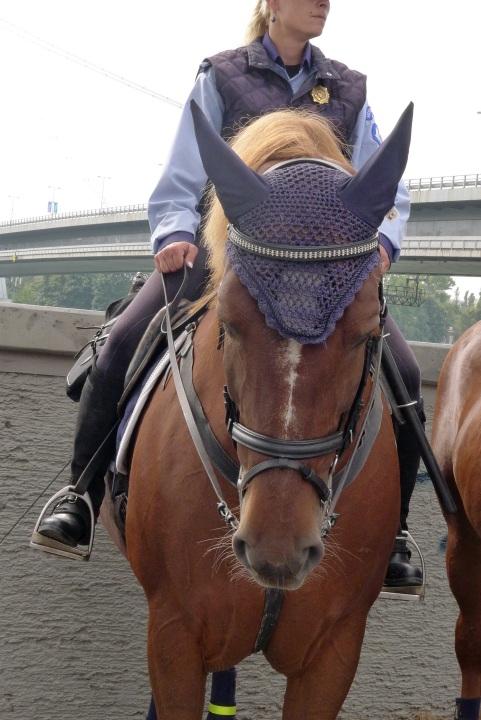 Horse with crochet headpiece