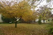 0406-autumngold