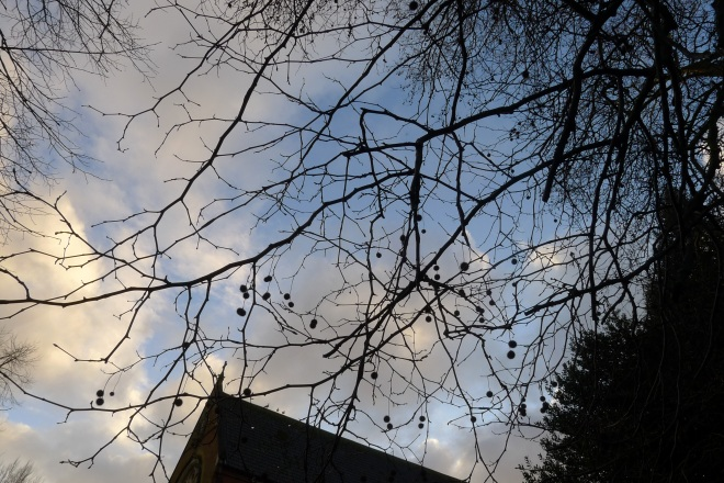 Photo Challenge1604 - Winter