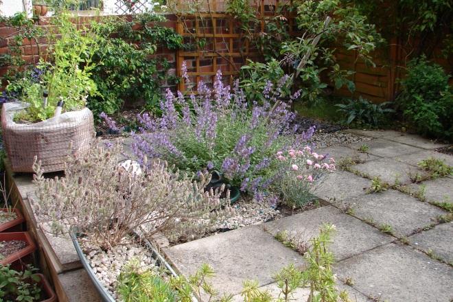 Left-hand side of garden