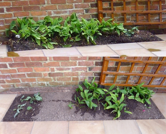 Difficult flower bed