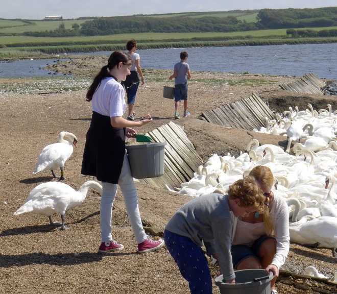 Louisa feeding swans