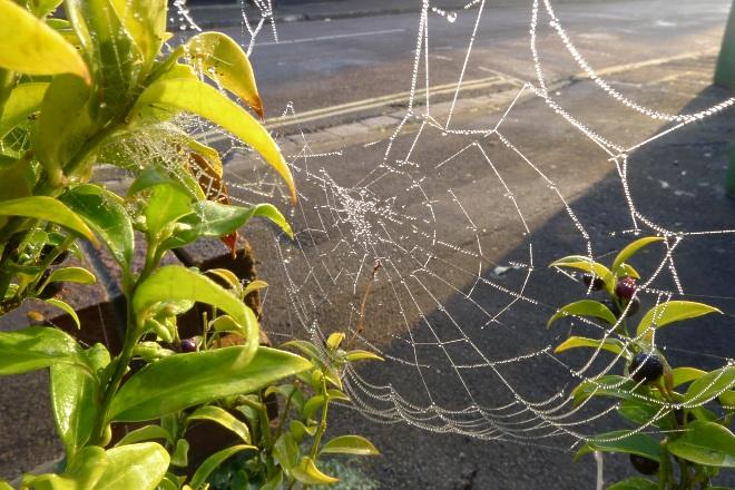 0534-spider-web