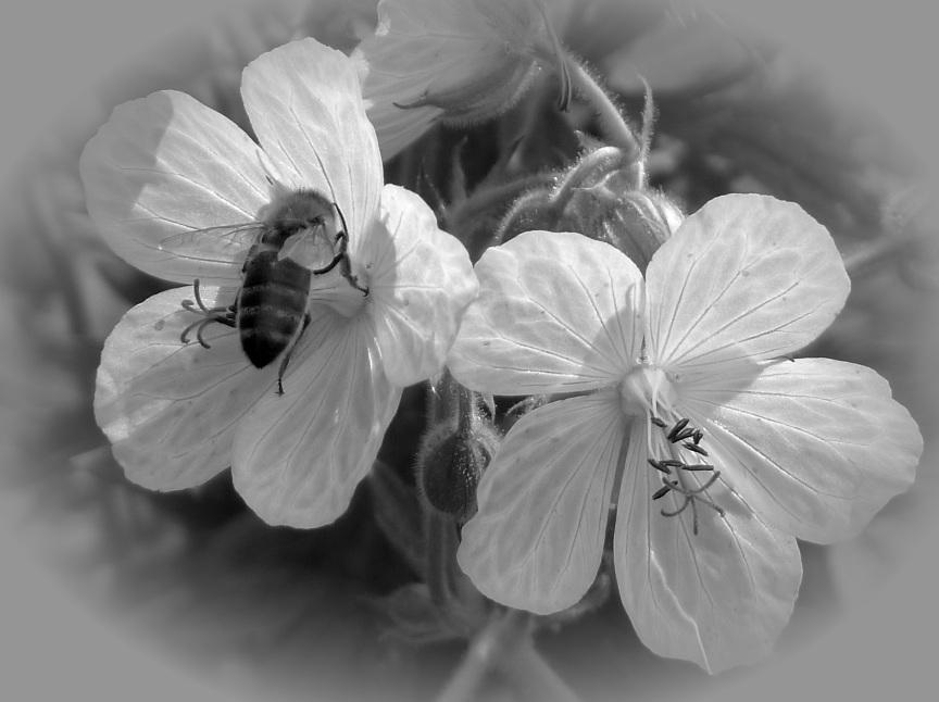 rainbow-junkie-3-5-bee-in-flower