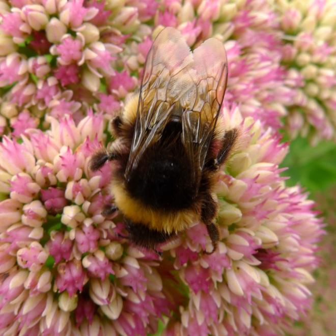 0550-bee-3-square