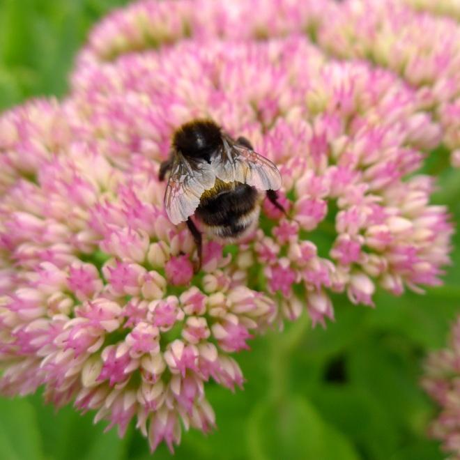 0550-bee-5-square
