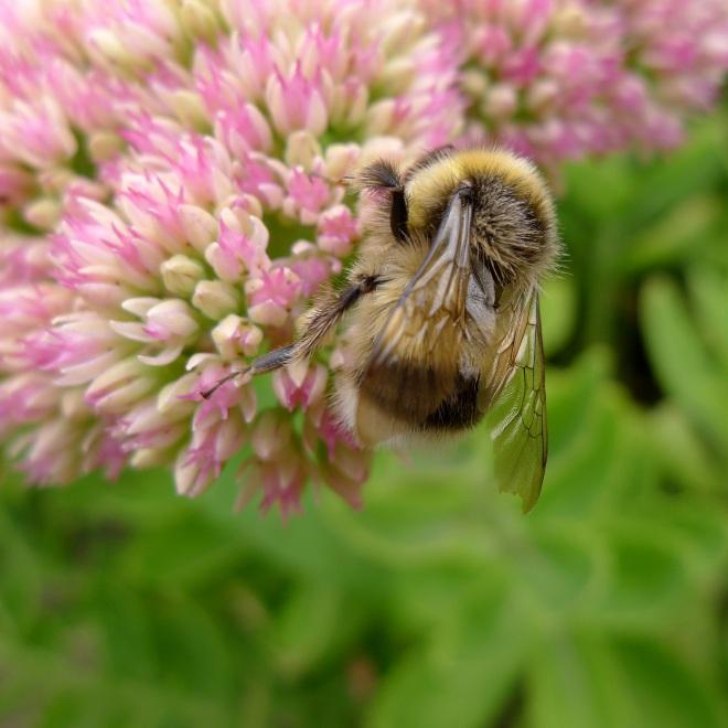 0550-bee-6-square