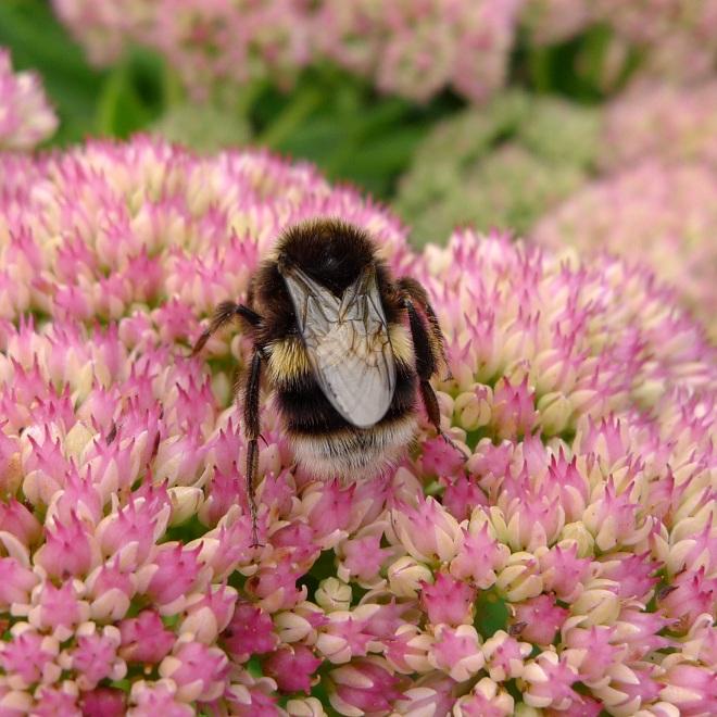 0550-bee-7