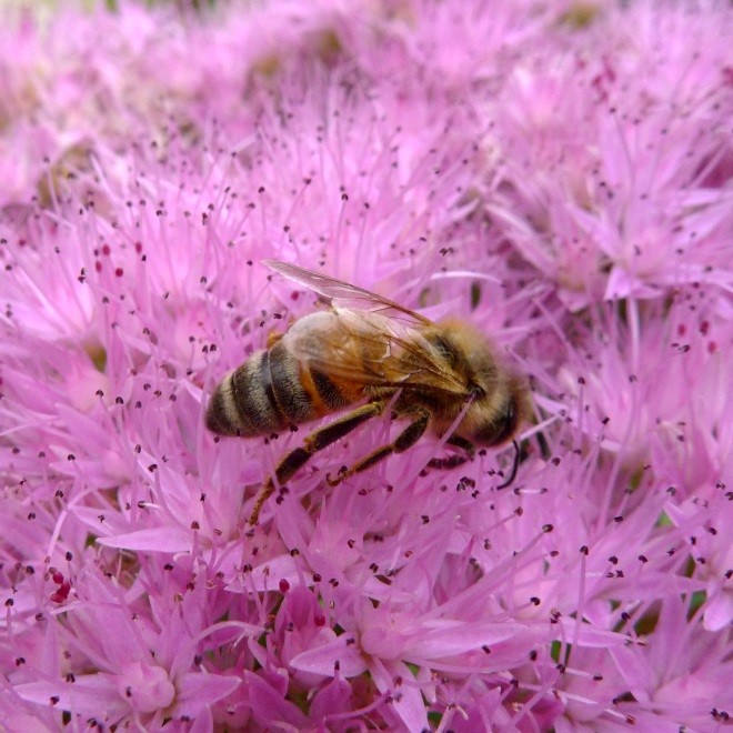 0550-bee-one-square