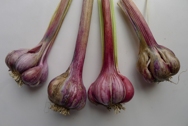 garlic washed