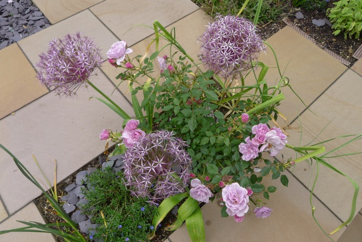Roses and alliums