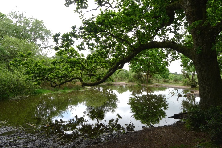 Rushy pond