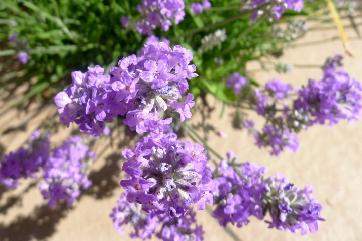 lavender closer