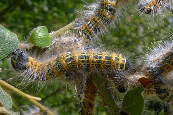 closer look at caterpillars