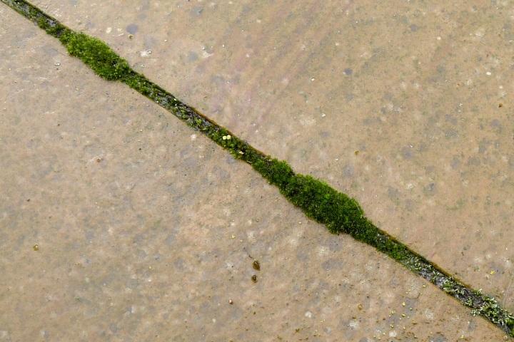 moss between slabs