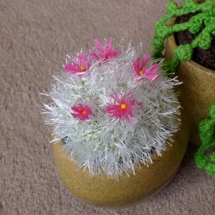 flowering old lady cactus