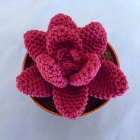 crocheted red agave