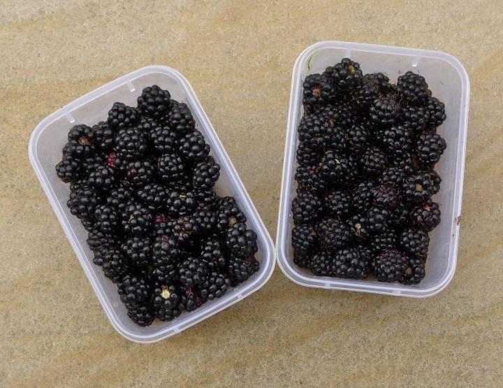 two lots of blackberries