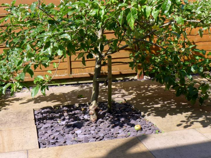 apple under tree